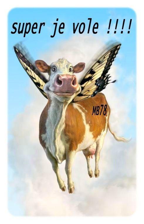 Drole de vache image vache drole - Image de vache drole ...