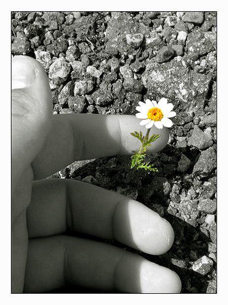 http://mabulle78.m.a.pic.centerblog.net/nnvsfs1l.jpg